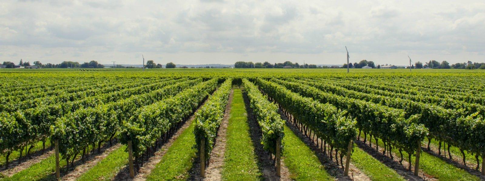 attrezzature_agricole_viticoltura_olbia-min